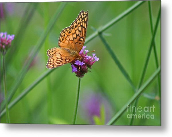 Variegated Fritillary Butterfly In Field Metal Print