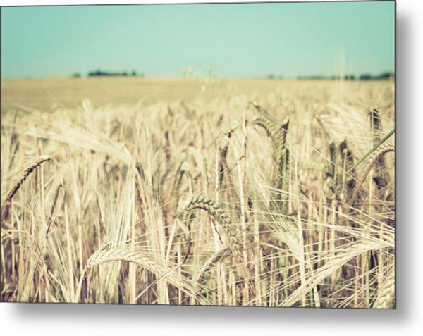 Wheat Crop Metal Print