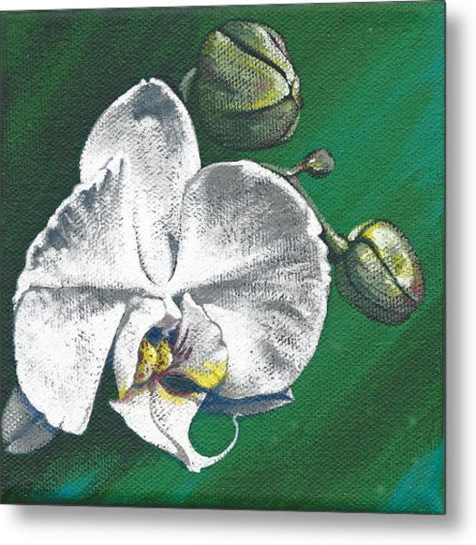 White Orchids II Metal Print