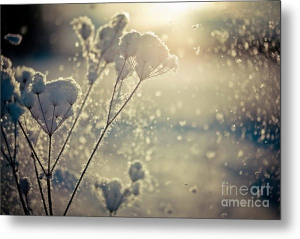 Metal Print featuring the photograph  Snow Covered Branch And Snow Fall Artmif by Raimond Klavins