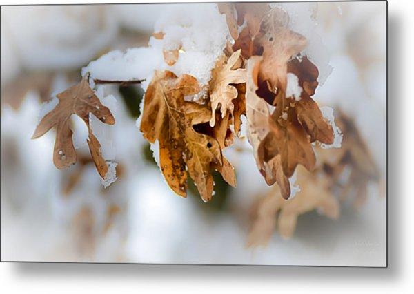 Winter Leaves Metal Print