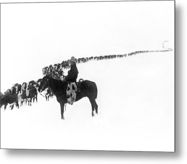 Wintertime Cattle Drive Metal Print