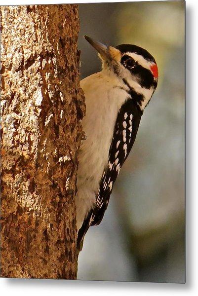 Woodpecker 109 Metal Print by Patsy Pratt
