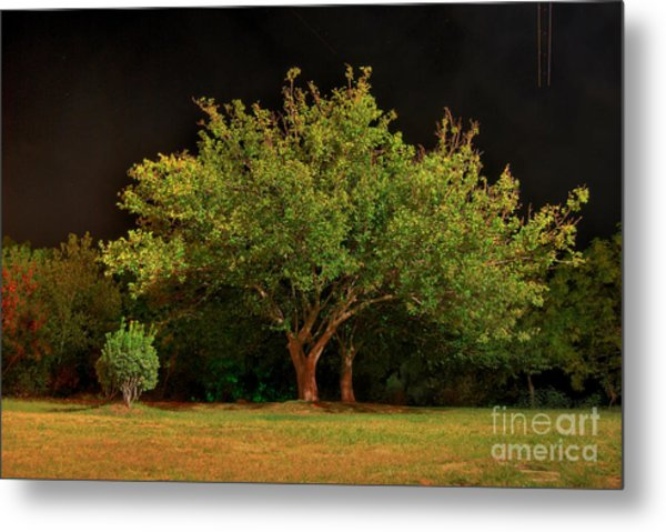 Young And Old - Summer Metal Print