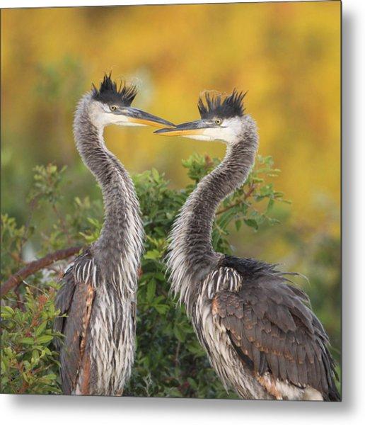 Young Herons Metal Print by Brian Magnier