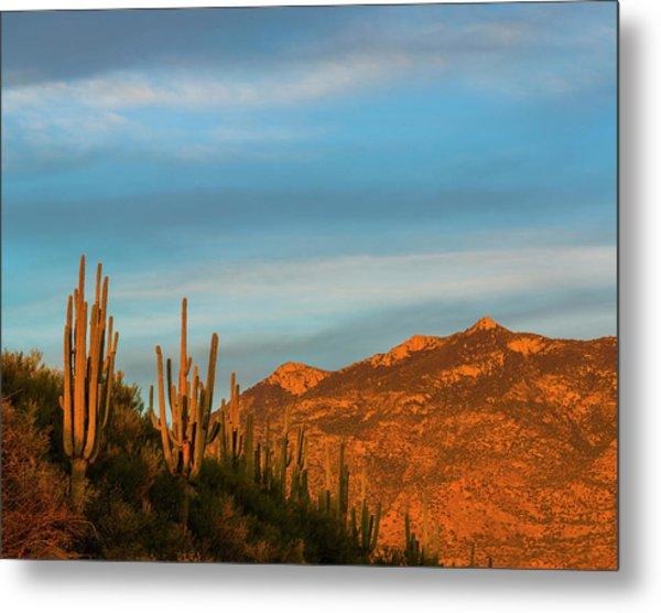 Saguaro Cactus Carnegiea Gigantea Metal Print