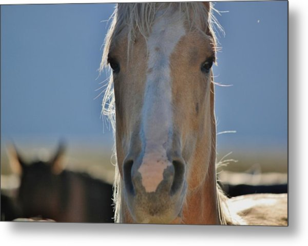108 Metal Print by Wynema Ranch
