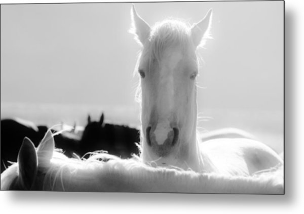 109 Metal Print by Wynema Ranch