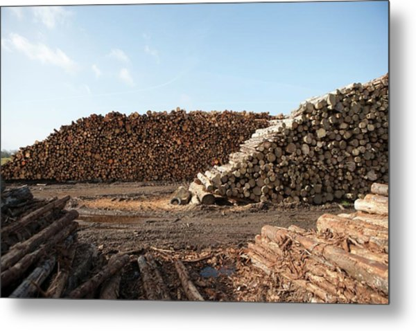 Wood Chip Fuel Production Metal Print by Lewis Houghton/science Photo Library