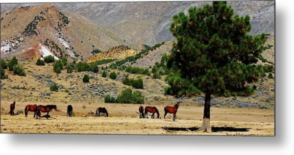 112 Metal Print by Wynema Ranch