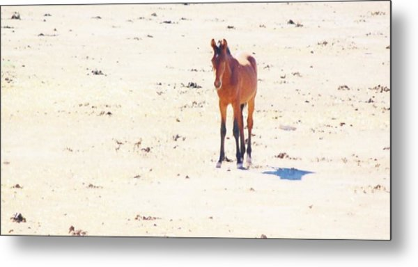 116 Metal Print by Wynema Ranch