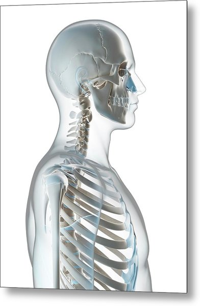Human Skull And Neck Metal Print by Sebastian Kaulitzki