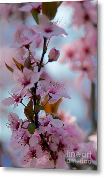 Plum Tree Flowers Metal Print