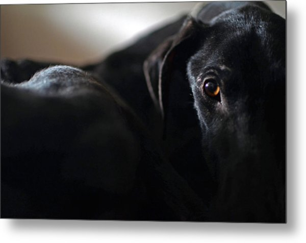 Hounding Misery The Misfortune Metal Print