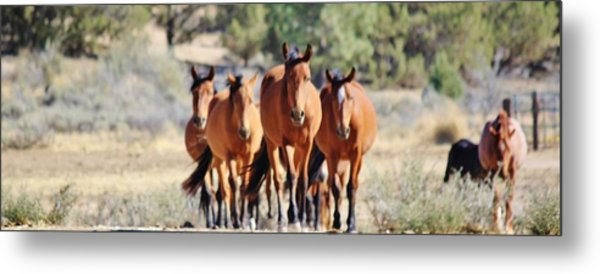 133 Metal Print by Wynema Ranch