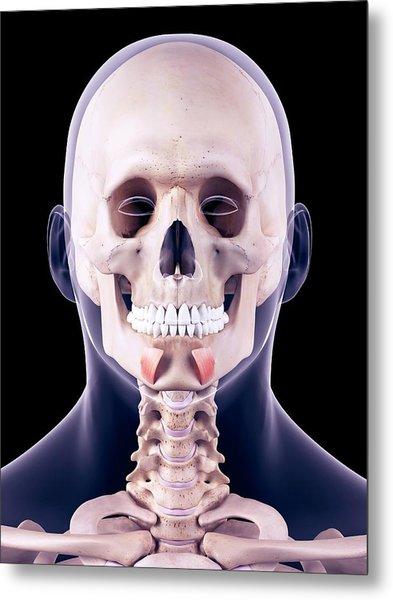 Facial Muscles Metal Print by Sebastian Kaulitzki/science Photo Library