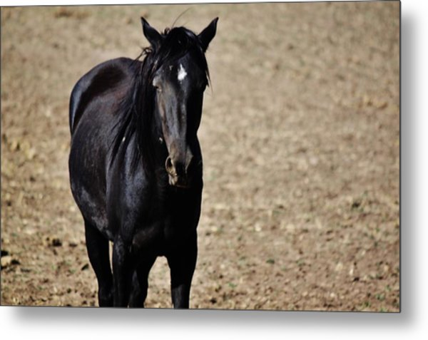 145 Metal Print by Wynema Ranch
