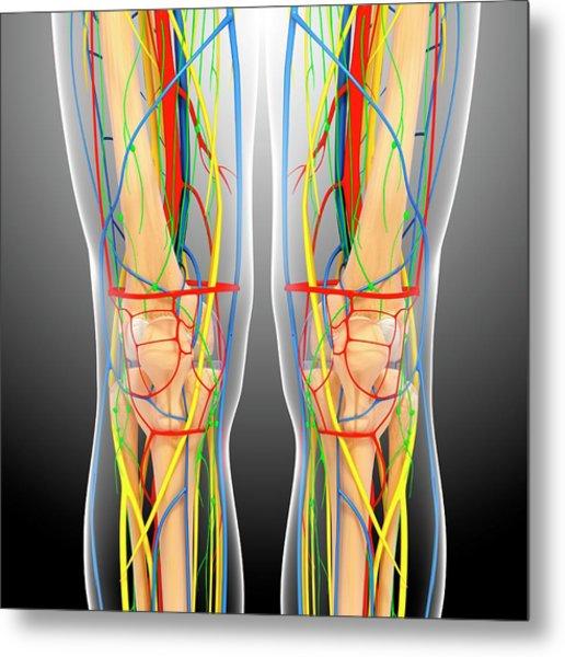 Knee Anatomy Metal Print by Pixologicstudio/science Photo Library