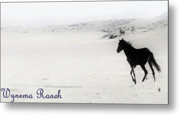 156 Metal Print by Wynema Ranch