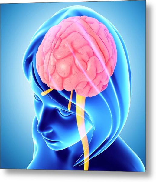 Female Brain Metal Print by Pixologicstudio/science Photo Library
