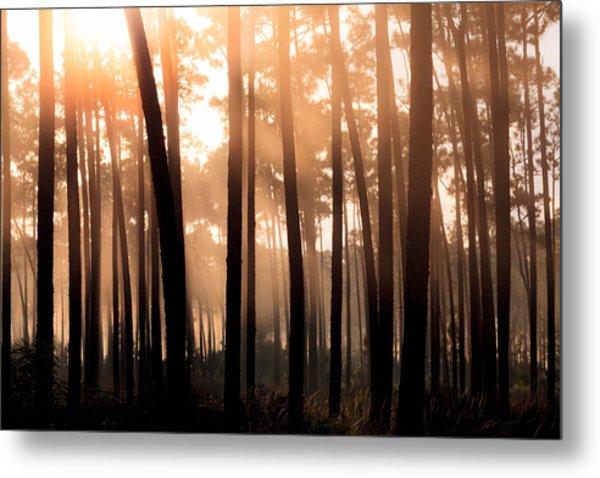 Foggy Sunrise At Long Pine Key Metal Print by Jonathan Gewirtz