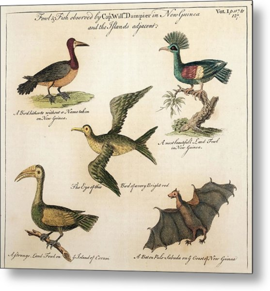 1735 William Dampier Birds Of The Pacific Metal Print