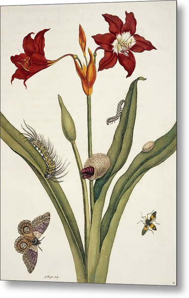 Insects Of Surinam Metal Print by Natural History Museum, London/science Photo Library