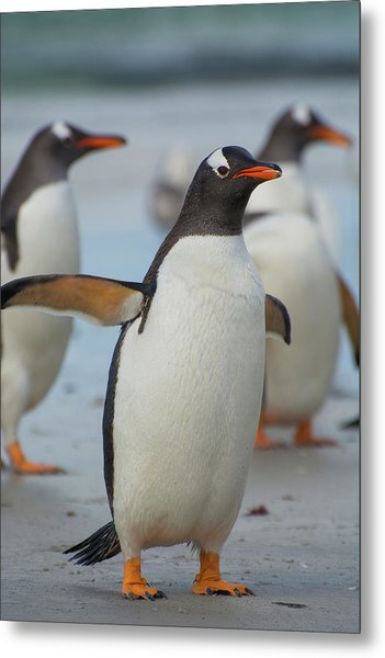 Falkland Islands Metal Print