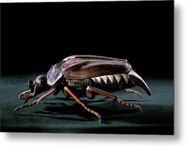 19th Century Model Of A Cockchafer Beetle Metal Print