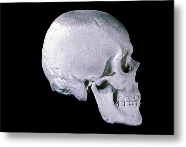 19th Century Model Of A Human Skull Metal Print