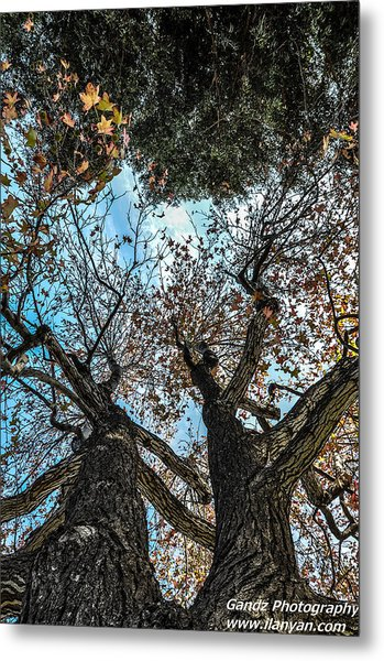 1st Tree Metal Print