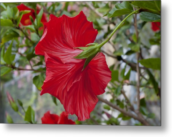 Abstract Hibiscus Metal Print