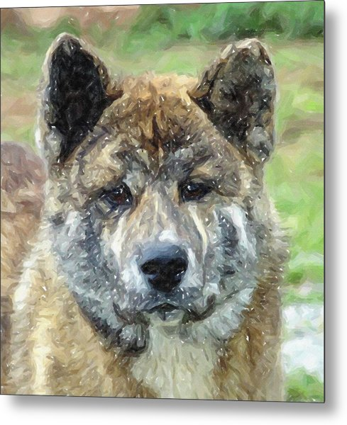 Akita Dog Portrait Metal Print by Olde Time  Mercantile