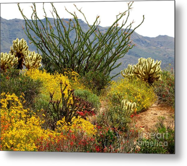 Arizona Springtime Metal Print
