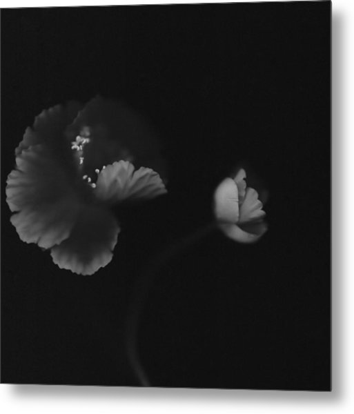 Autographic Poppies Metal Print