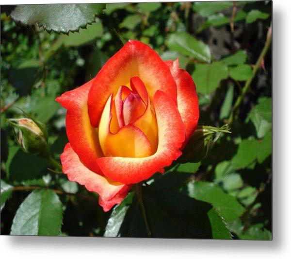 Betty Boop Rose Metal Print