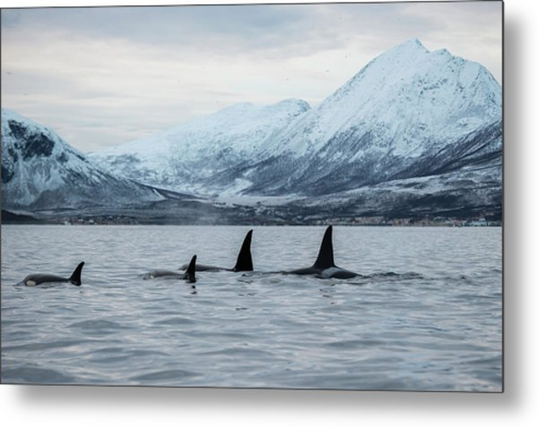 2 Big 2 Small Metal Print by By Wildestanimal