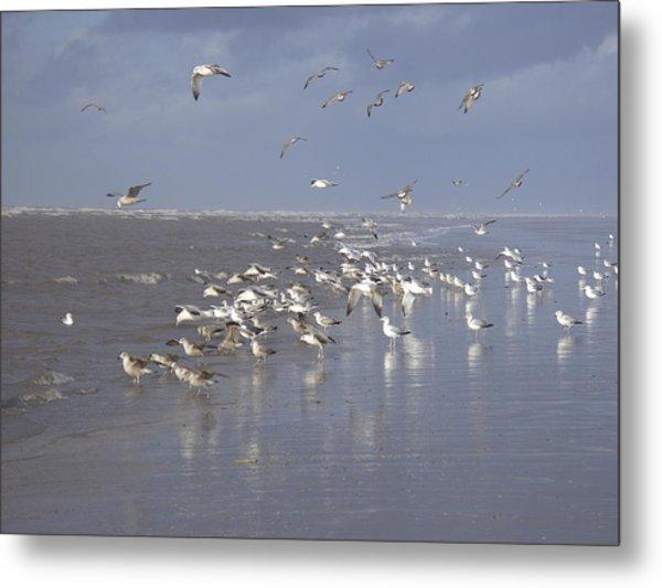 Birds At The Beach Metal Print