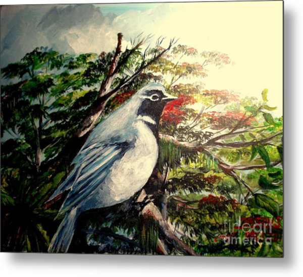 Black-throated Robin  Metal Print