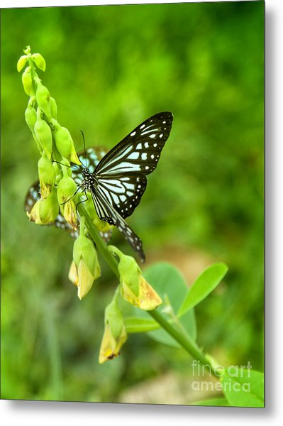 Blue Butterflies In The Green Garden Metal Print by Gina Koch