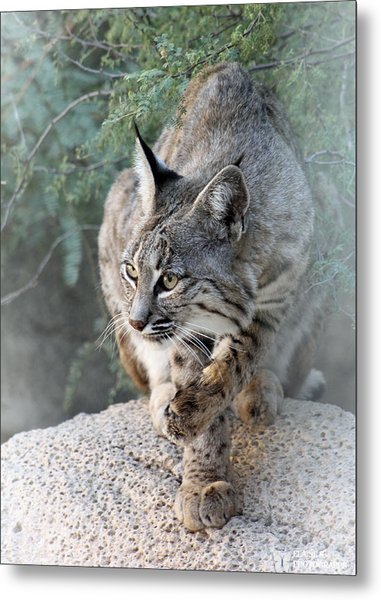 I Was Grooming Metal Print