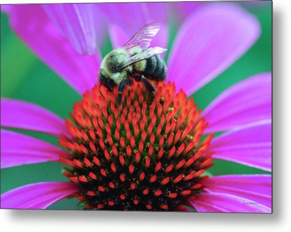 Bumblebee On Flower Metal Print