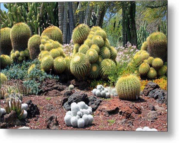 Cactus Metal Print by Jim McCullaugh