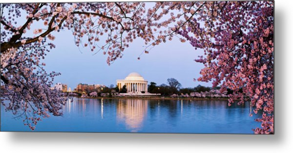 Cherry Blossom Tree With A Memorial Metal Print
