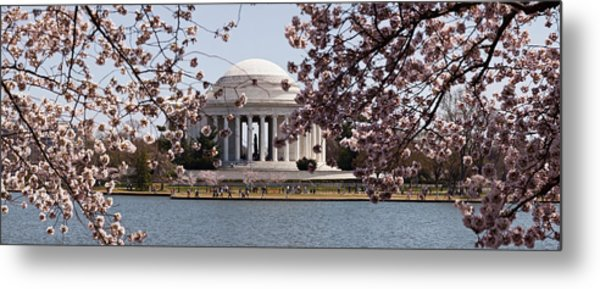 Cherry Blossom Trees In The Tidal Basin Metal Print