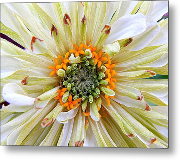 Chrysanthemum Fall In New Orleans Louisiana Metal Print