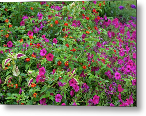 Close-up Of Multi-colored Flowers Metal Print