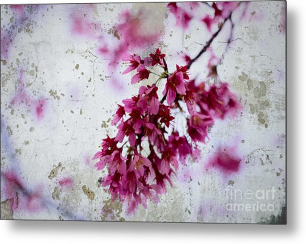Deep Pink Flowers With Grey Concrete Texture Background Metal Print