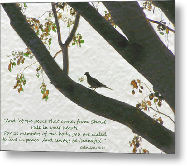 Metal Print featuring the photograph Dove Silhouette On Tree by Grace Dillon