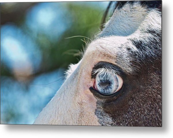 Eye Of The Beholder Metal Print by Frank Feliciano